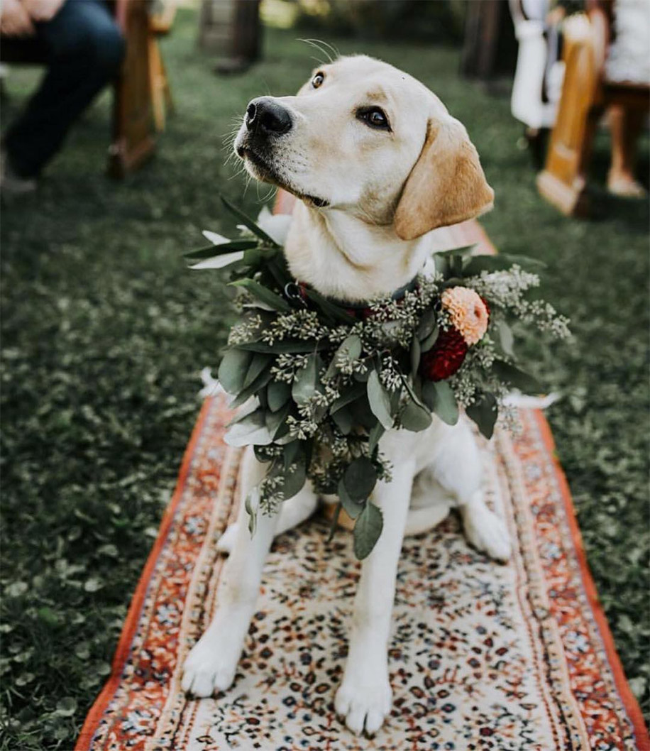 Wedding Outfits for your Fur Babies!