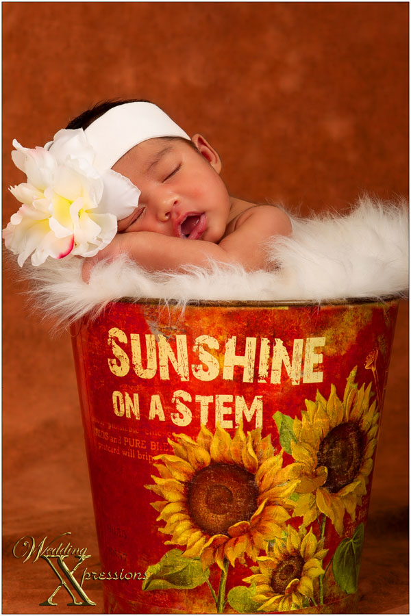 baby in bucket sunshine on a stem