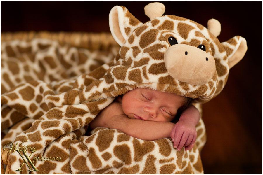 newborn baby portraits el paso