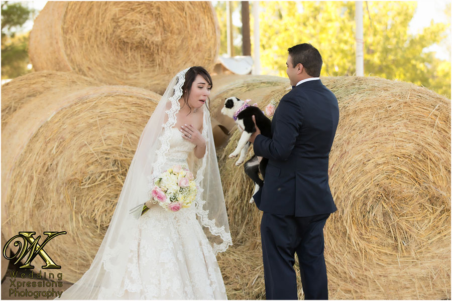 groom gives bride a puppy during El Paso ranch wedding.