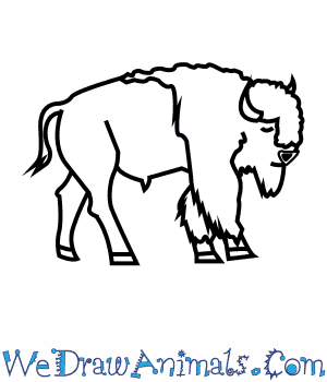How to Draw an American Bison