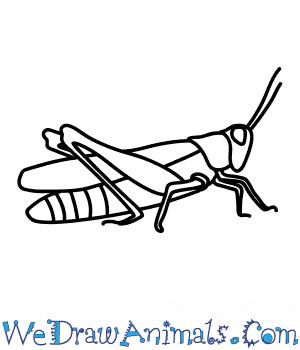 maycintadamayantixibb: Easy Drawing Of A Grasshopper