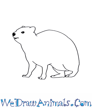How to Draw a Rock Hyrax