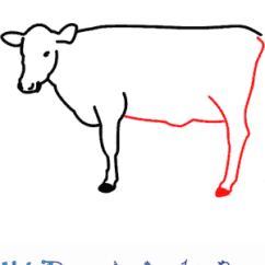 Labelled Diagram Of A Cow Keystone Rv Dealers In Yuma Az How To Draw Print Tutorial