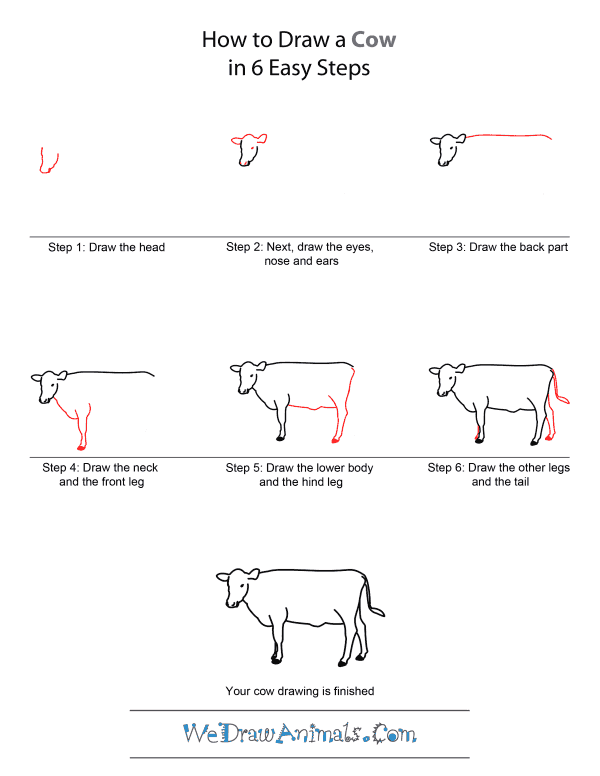 labelled diagram of a cow how do you draw bohr rutherford to quick step by tutorial