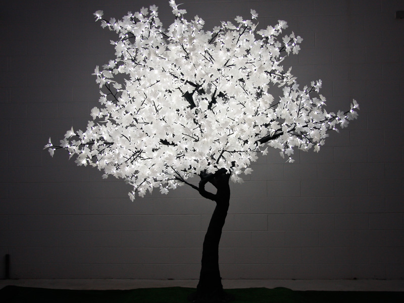 2 8m led maple