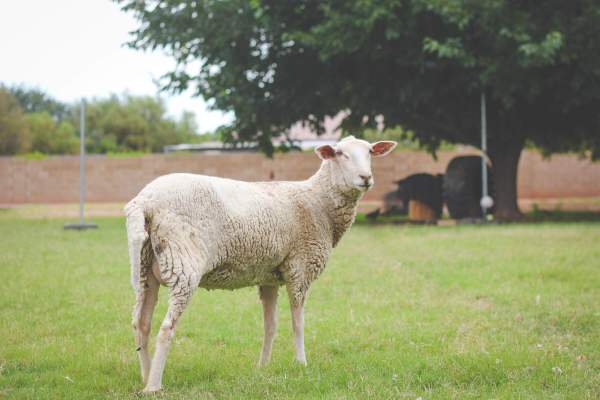 Raising Meat Goats Naturally - Year of Clean Water