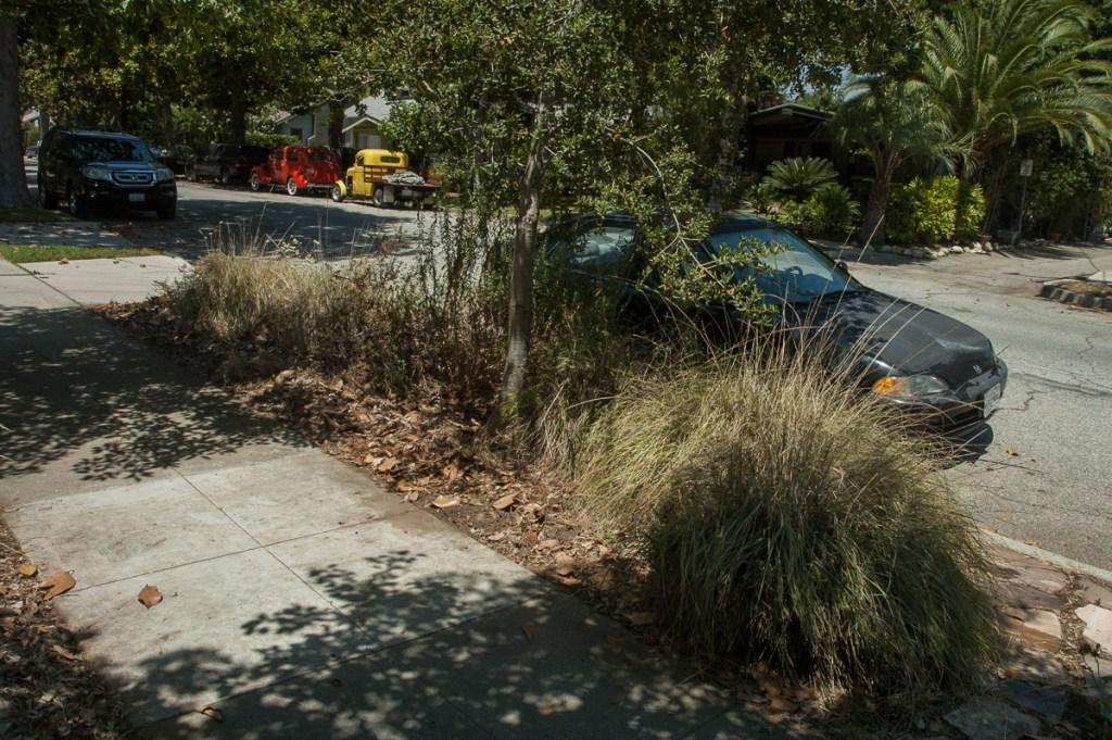 Deergrass under oak