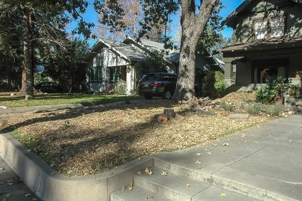 Wood chips moved off tree and spread