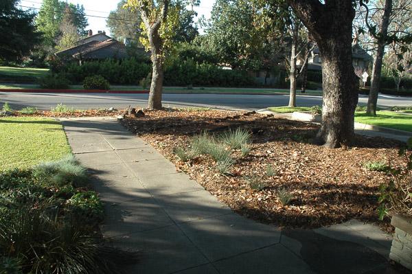 Temporary path created with tree debris. (Feb 16, 2012)