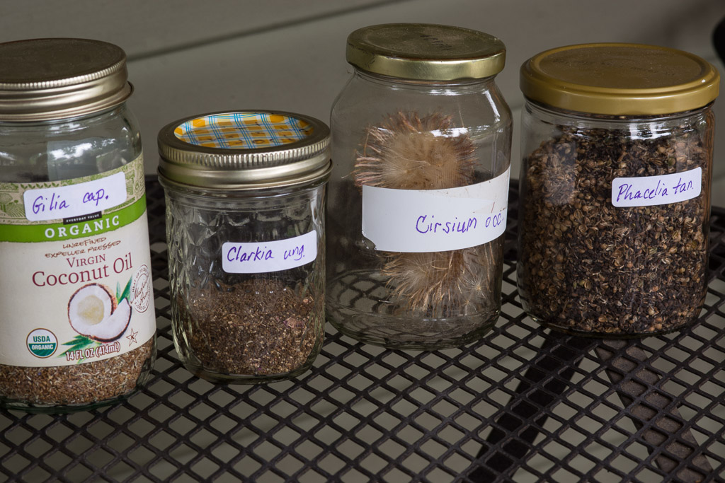 Wildflower seeds stored until next fall