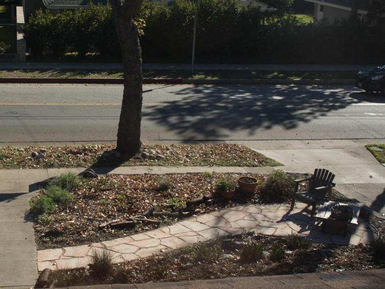 Front yard garden, 1/2/16)