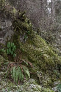 Mosses and ferns in winter forest