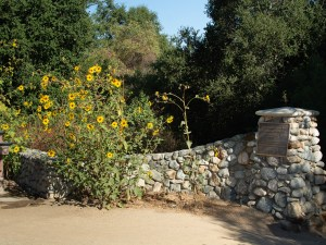 Sunflowers in park entrance