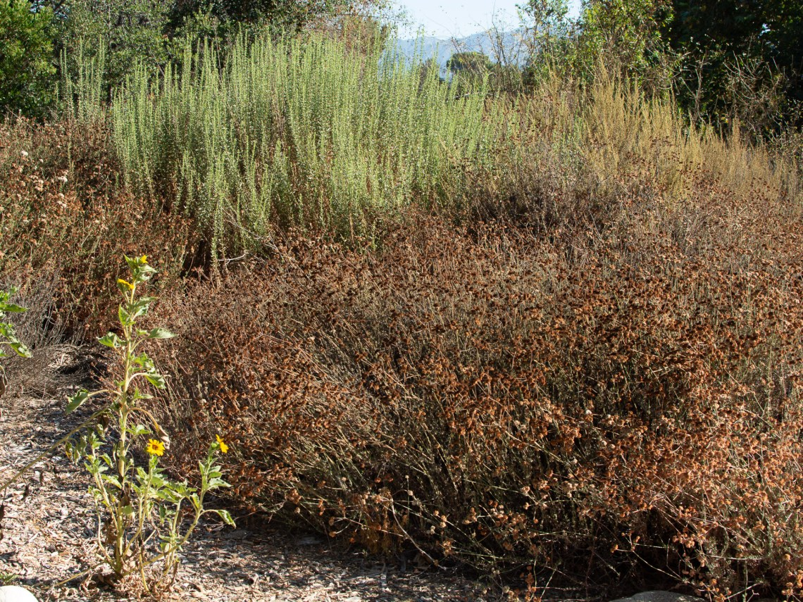 Native plants in August
