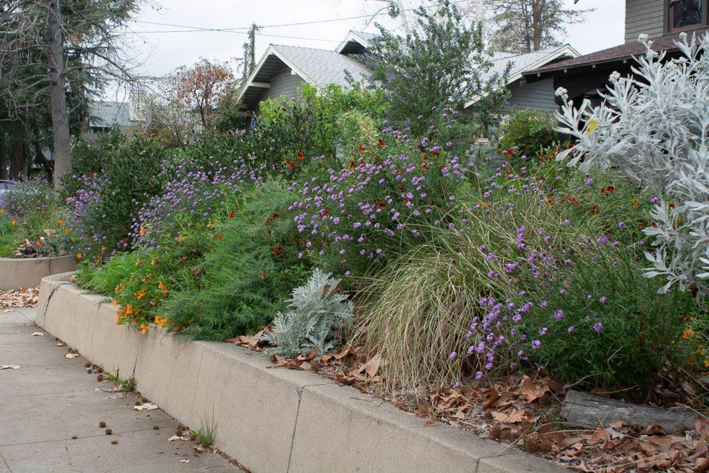 Spring wildflower in garden border
