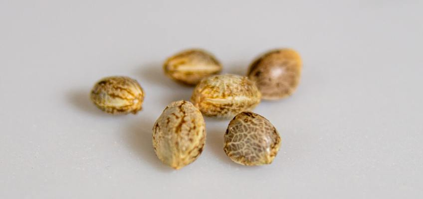 weed seeds for sale in Australia