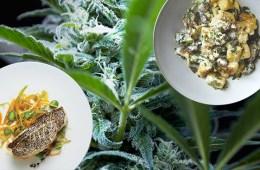 weedfood