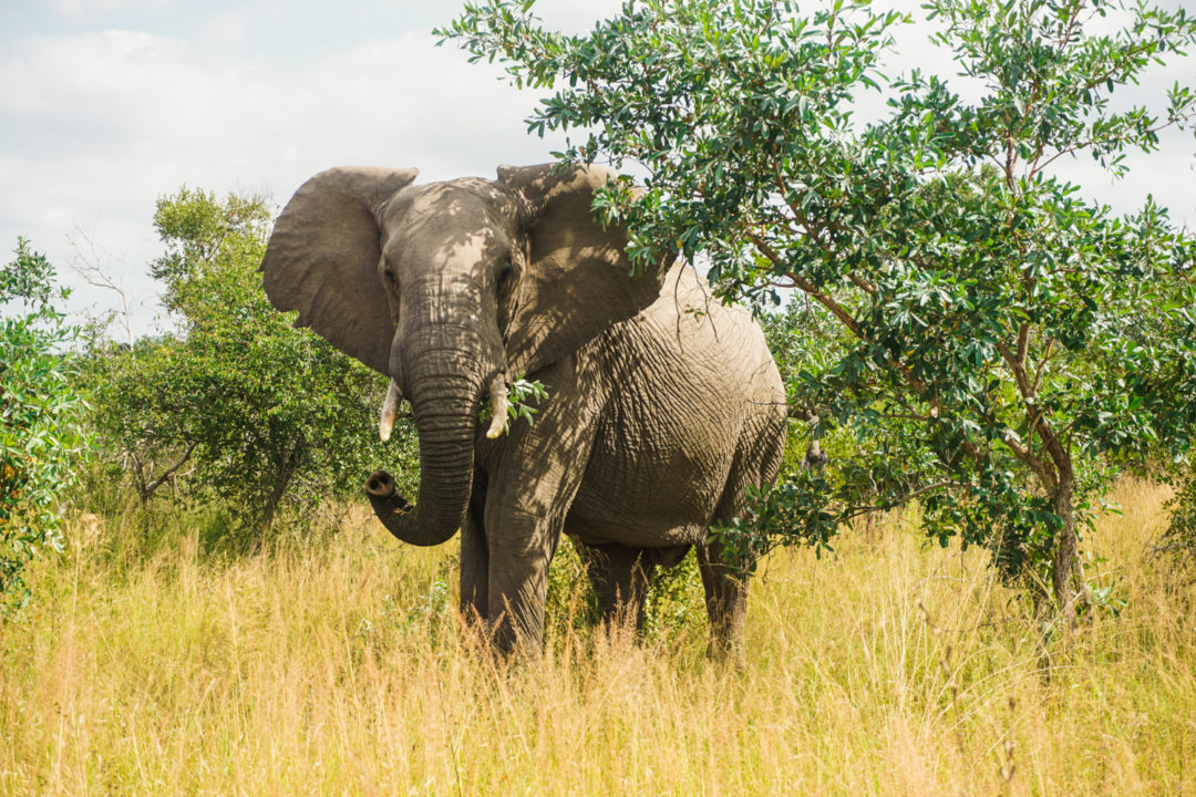 How to Plan an Independent Safari in Kruger National Park - Wee