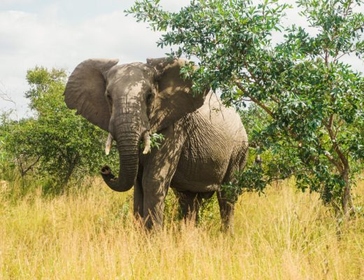 safari south africa kruger national park independent budget plan self drive