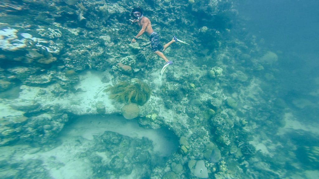 Coral Reef: Snorkelling in Caye Caulker