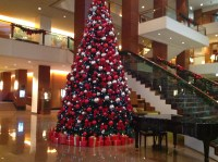 Top Christmas Tree Displays in Sydney - Sydney - by Caroleann