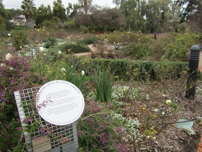 urrbrae house, rose gardens, labyrinth, waite arboretum