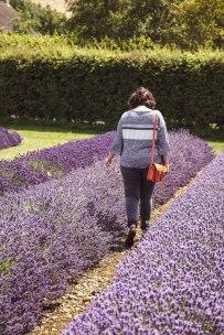 Jess Lavender Shoot - 3