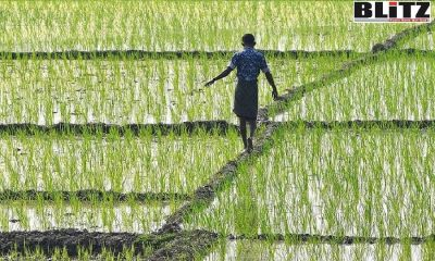 Farmers, Food systems, Investment