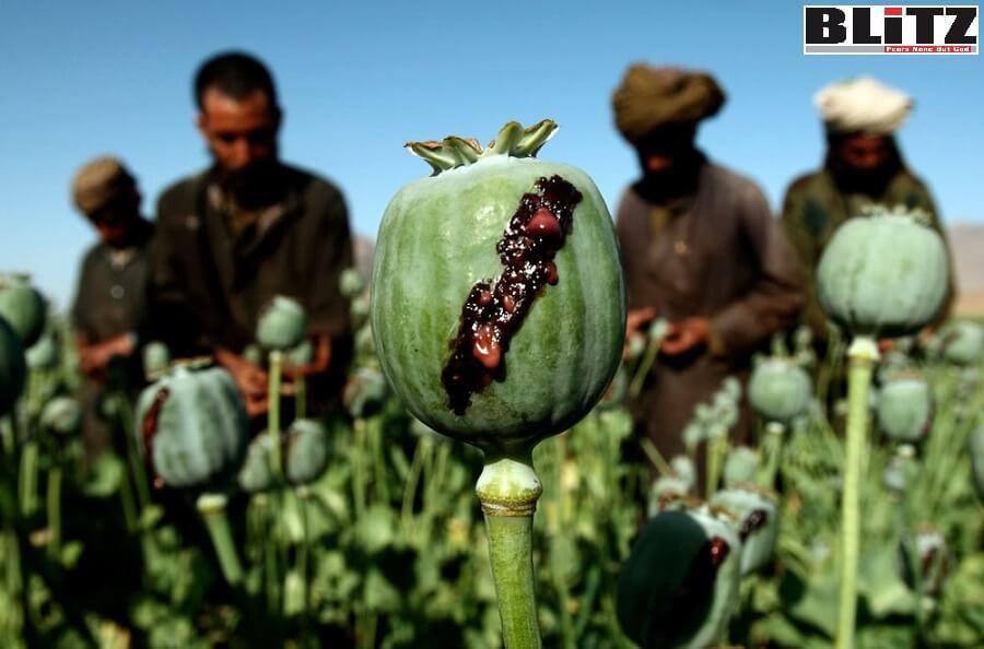 Afghanistan, Taliban, Al Qaeda, Islamic State, Badghis, Kandahar, Uruzgan, Faryab, Farah, Badakhshan, Balkh, Nimroz, COVID-19, UNODC, NSIA, Afghanistan