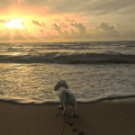 Costa Rica: A dog lover's paradise
