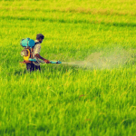 Costa Rica uses more chemicals on crops than any other country in the world.