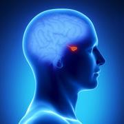 Hormonen en rugpijn