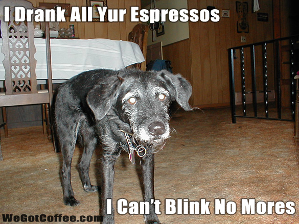 Funny Dog And Espresso Picture