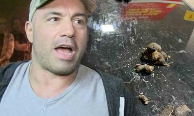 Joe Rogan's Truck Turd Bombed By Toilet-Hating Airport Cats