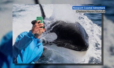 Selfie time! Orca whales stop to take pictures with fisherman in Southern California