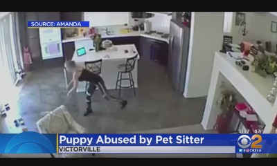 Caught On Tape: Pet Sitter Throws 10-Month-Old Puppy To The Floor