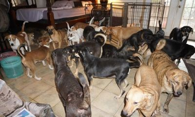 Woman shelters 97 dogs in her home as Hurricane Dorian lashes Bahamas