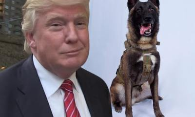 President Trump's Medal For ISIS-Killing Dog Conan Made by Special Ops