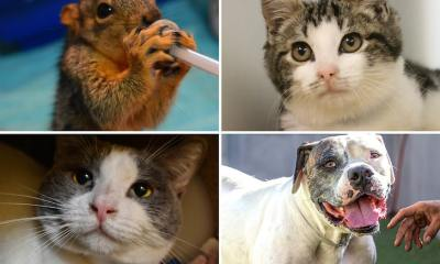 Animal Shelters See Influx of Kids, Seniors Looking to Adopt or Foster Pets