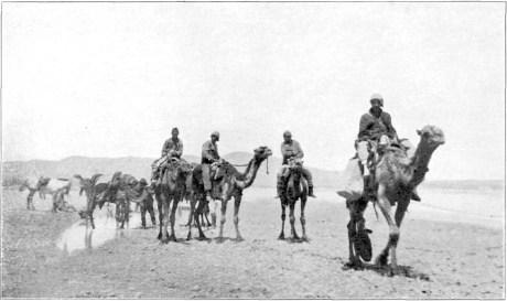 camels-carr-blog