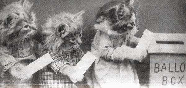 catsvoting