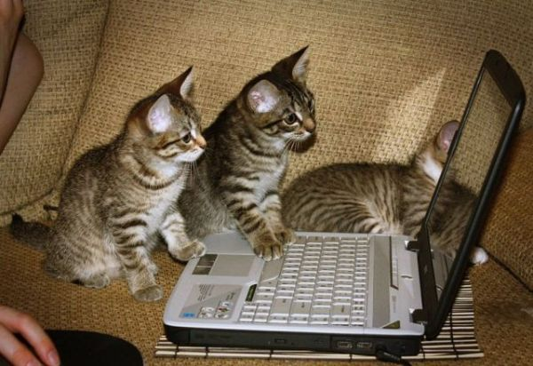 Kittens composing feminist tweets.