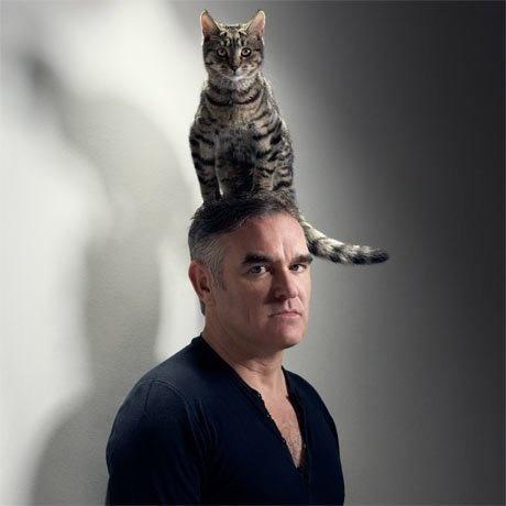 Pretty Cats Make Hats