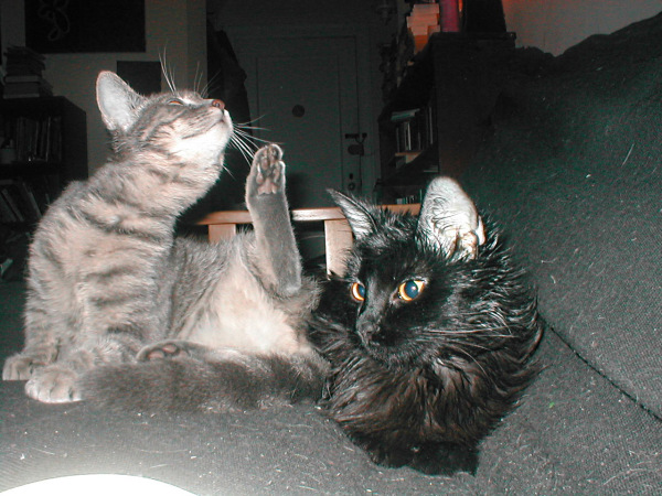 Sweetie and Pantz, doing the kitten thing.