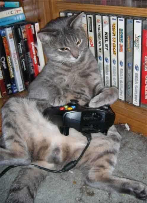 funny_cats_play_video_games_1003