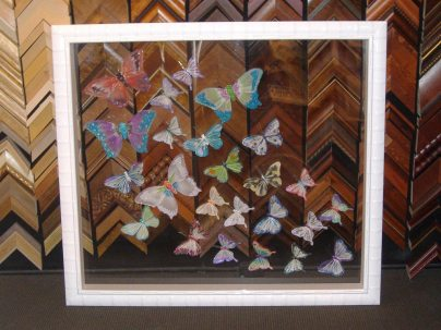 Image - Butterfly specimens in a see through shadowbox