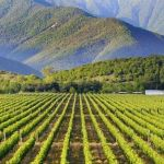 Georgischer Weinbau