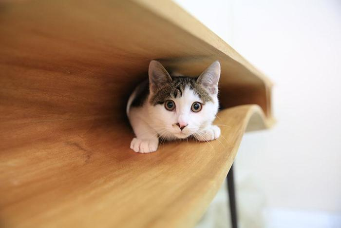 Cat in front part of catable desk