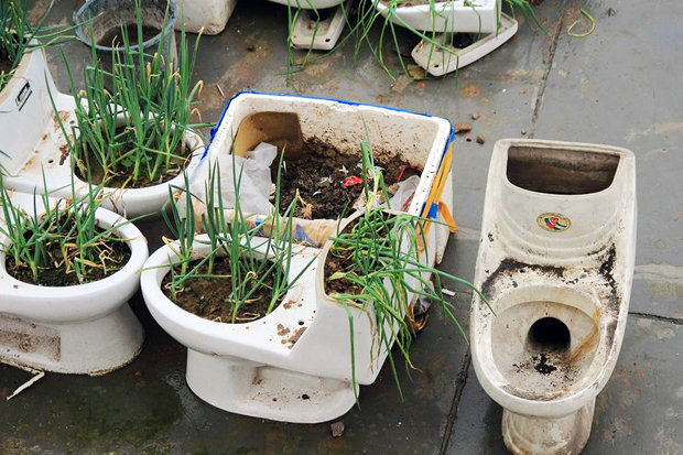 Toilets used as planters on the roof